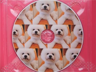 ビションフリーゼトリミング文京区ビションフリーゼカットフントヒュッテビションフリーゼ子犬情報東京hundehutteバースデープレゼントCDギフトケース18.jpg