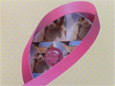 保護猫里親募集里親さん募集中野良猫迷子猫保護猫掲示板いつでも里親募集中東京フントヒュッテ文京区トリミングビションフリーゼカット猫トリミングhundehutte34.jpg