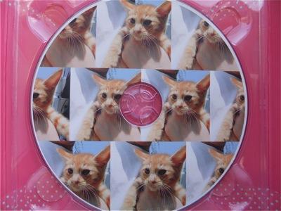 保護猫里親募集里親さん募集中野良猫迷子猫保護猫掲示板いつでも里親募集中東京フントヒュッテ文京区トリミングビションフリーゼカット猫トリミングhundehutte35.jpg