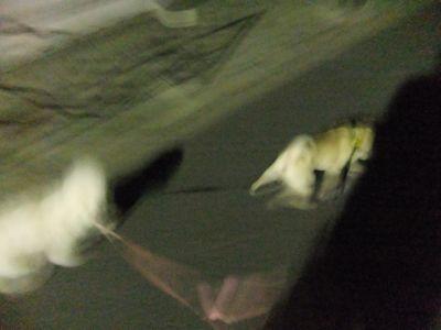 犬ペットホテル文京区フントヒュッテオリジナル首輪リードハーネスカフェリード犬用グッズhundehutte東京ビションフリーゼこいぬ文京区トリミングビションカット8.jpg