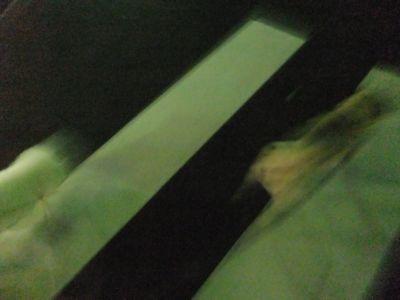 犬ペットホテル文京区フントヒュッテオリジナル首輪リードハーネスカフェリード犬用グッズhundehutte東京ビションフリーゼこいぬ文京区トリミングビションカット9.jpg