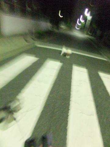 ペットホテル文京区ビションフリーゼトリミングビションカットhundehutte東京ビションフリーゼフントヒュッテ通販首輪リード犬のおさんぽ文京グリーンコート59.jpg