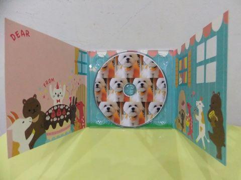 ビションフリーゼトリミング文京区ビションフリーゼカットフントヒュッテビションフリーゼこいぬ子犬東京hundehutte犬のトリミングわんちゃんハーブパック15.jpg