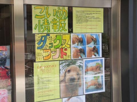 ダックスフンドこいぬ情報カラーゴールドダックスおんなのこトイ・プードル子犬情報フントヒュッテビションフリーゼ東京ノーフォーク・テリア希少犬種hundehutte2.jpg