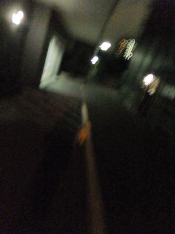 犬おあずかり犬ホテル東京ペットホテル文京区フントヒュッテビションフリーゼ東京ビションフリーゼトリミング文京区ビションフリーゼカット1.jpg