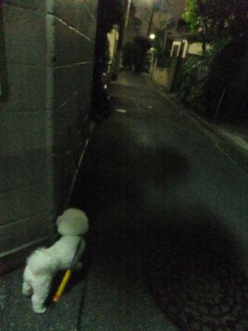 犬おあずかり犬ホテル東京ペットホテル文京区フントヒュッテビションフリーゼ東京ビションフリーゼトリミング文京区ビションフリーゼカット3.jpg