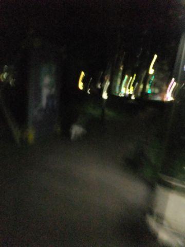 犬おあずかり犬ホテル東京ペットホテル文京区フントヒュッテビションフリーゼ東京ビションフリーゼトリミング文京区ビションフリーゼカット9.jpg