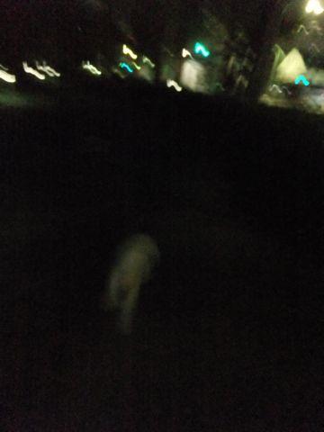 犬おあずかり犬ホテル東京ペットホテル文京区フントヒュッテビションフリーゼ東京ビションフリーゼトリミング文京区ビションフリーゼカット10.jpg