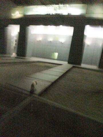 犬おあずかり犬ホテル東京ペットホテル文京区フントヒュッテビションフリーゼ東京ビションフリーゼトリミング文京区ビションフリーゼカット14.jpg