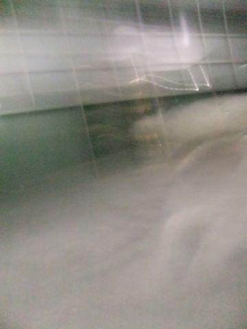 犬おあずかり犬ホテル東京ペットホテル文京区フントヒュッテビションフリーゼ東京ビションフリーゼトリミング文京区ビションフリーゼカット16.jpg
