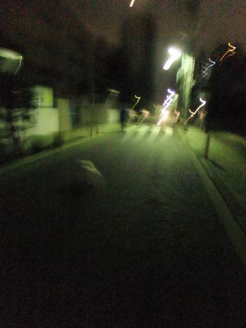 犬おあずかり犬ホテル東京ペットホテル文京区フントヒュッテビションフリーゼ赤ちゃん情報東京ビションフリーゼトリミング文京区hundehutteペットホテル犬おさんぽ1.jpg