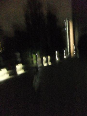 犬おあずかり犬ホテル東京ペットホテル文京区フントヒュッテビションフリーゼ赤ちゃん情報東京ビションフリーゼトリミング文京区hundehutteペットホテル犬おさんぽ3.jpg