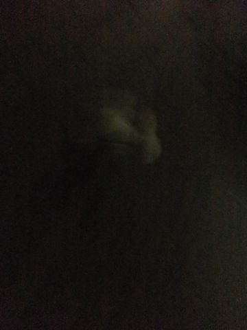 犬おあずかり犬ホテル東京ペットホテル文京区フントヒュッテビションフリーゼ赤ちゃん情報東京ビションフリーゼトリミング文京区hundehutteペットホテル犬おさんぽ4.jpg