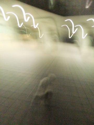 犬おあずかり犬ホテル東京ペットホテル文京区フントヒュッテビションフリーゼ赤ちゃん情報東京ビションフリーゼトリミング文京区hundehutteペットホテル犬おさんぽ5.jpg