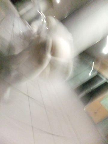 犬おあずかり犬ホテル東京ペットホテル文京区フントヒュッテビションフリーゼ赤ちゃん情報東京ビションフリーゼトリミング文京区hundehutteペットホテル犬おさんぽ9.jpg