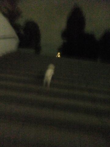 犬おあずかり犬ホテル東京ペットホテル文京区フントヒュッテビションフリーゼ赤ちゃん情報東京ビションフリーゼトリミング文京区hundehutteペットホテル犬おさんぽa.jpg