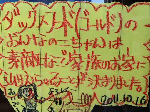 ダックスフンドこいぬ情報フントヒュッテ東京カニヘンダックスチョコタンダックスフンドクリームダックス色ゴールドダックスhundehutte文京区トイプードル子犬2.jpg