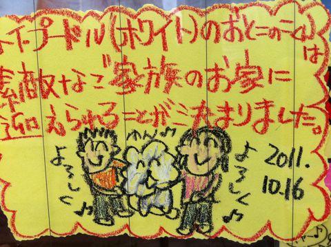 ダックスフンドこいぬ情報フントヒュッテ東京カニヘンダックスチョコタンダックスフンドクリームダックス色ゴールドダックスhundehutte文京区トイプードル子犬4.jpg