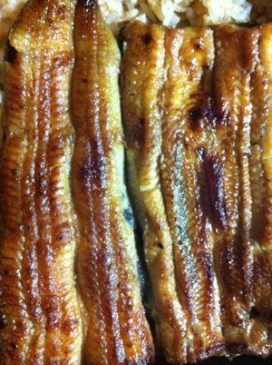 鰻うなぎウナギ土用丑の日夏バテを防ぐためにウナギを食べる習慣鰻の蒲焼うなぎの白焼鰻丼鰻肝吸い肝焼きうなぎパイひつまぶしうなぎ慣用句うなぎの寝床.jpg
