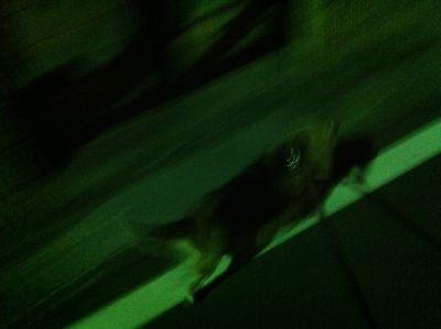 ビーグルトリミング東京フントヒュッテhundehutteナノオゾンペットシャワー使用店ビーグルシャンプー文京区ケーキ屋ストレル定番スイーツぴあMOOKクリスマスケーキ3.jpg