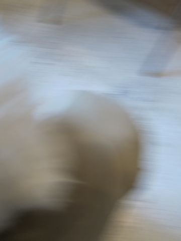 ビションフリーゼトリミング文京区フントヒュッテナノオゾンペットシャワー使用店東京hundehutteハーブパック犬トリミング東京ビションカットビションフォルム18.jpg
