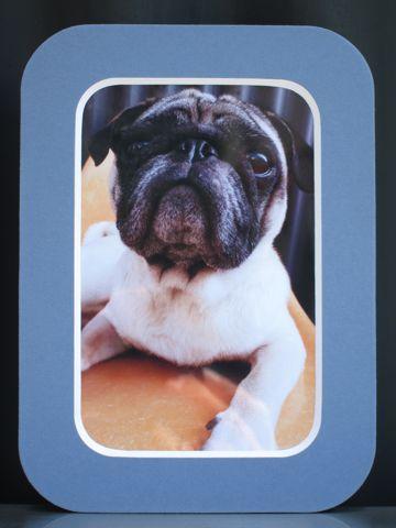パグトリミング文京区フントヒュッテナノオゾンペットシャワー使用店東京ハーブパック犬デンタルケア犬の歯みがきhundehutteわんこシャンプーパグフォーンn.jpg