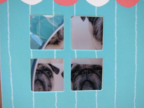 パグトリミング文京区フントヒュッテナノオゾンペットシャワー使用店東京ハーブパック犬デンタルケア犬の歯みがきhundehutteわんこシャンプーパグフォーンq.jpg