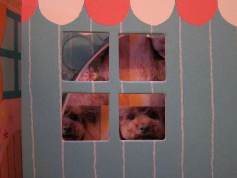 トイ・プードルトリミング文京区フントヒュッテ東京ナノオゾンペットシャワー使用トリミングサロンhundehutteトイプードルデザインカット集犬歯磨き犬の歯医者22.jpg