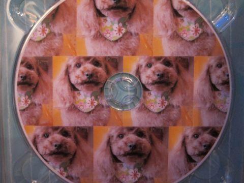 トイ・プードルトリミング文京区フントヒュッテ東京ナノオゾンペットシャワー使用トリミングサロンhundehutteトイプードルデザインカット集犬歯磨き犬の歯医者24.jpg