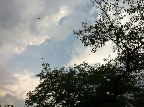 【東京地方】今夜は、雨で夜遅くには曇りとなりますが、夜遅くまで雷雨となる所があるでしょう。明日は、曇りで朝晩を中心に雨の降る所がある見込みです。3.jpg