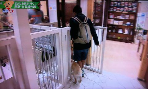 ペット大集合!ポチたま まさはる君が行く! 3代目旅犬まさはる君 3代目旅犬まさはる君 ラブラドール・レトリーバーのまさはる君 松本君 松本秀樹 小倉久寛 6.jpg