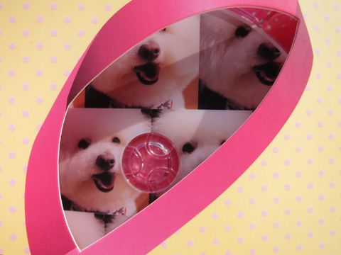 ビションフリーゼフントヒュッテ文京区トリミングナノオゾンペットシャワー使用店東京ビションフリーゼのカットのできるお店犬お誕生日バースデー割引hundehuttee.jpg