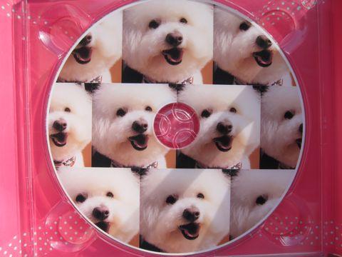 ビションフリーゼフントヒュッテ文京区トリミングナノオゾンペットシャワー使用店東京ビションフリーゼのカットのできるお店犬お誕生日バースデー割引hundehutteg.jpg