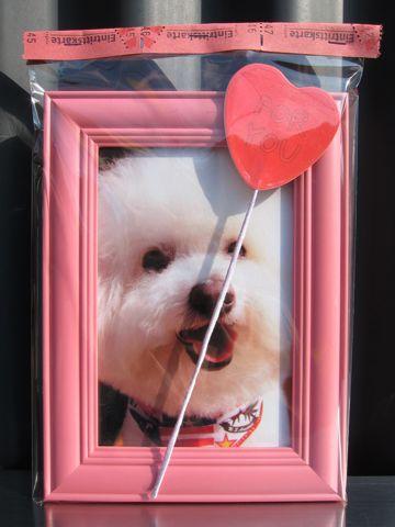 ビションフリーゼフントヒュッテ文京区トリミングナノオゾンペットシャワー使用店東京ビションフリーゼのカットのできるお店犬お誕生日バースデー割引hundehuttel.jpg