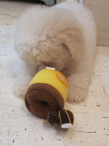 ビションフリーゼフントヒュッテ東京子犬こいぬかわいいビションフリーゼブリーダーかわいいビションフリーゼのいるお店文京区本駒込hundehutte仔犬ビション12.jpg