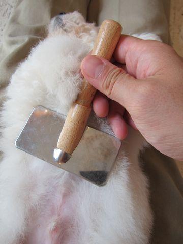 ビションフリーゼフントヒュッテ東京子犬こいぬかわいいビションフリーゼブリーダーかわいいビションフリーゼのいるお店文京区本駒込hundehutte仔犬ビション121.jpg
