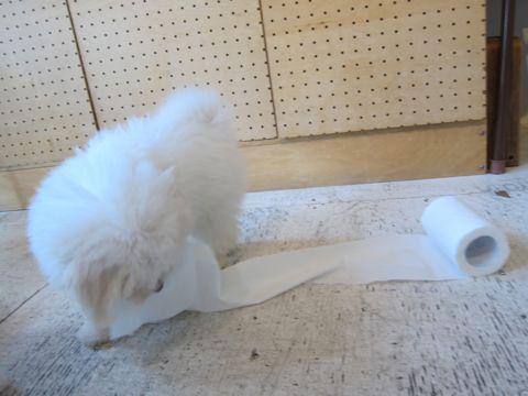 ビションフリーゼフントヒュッテ東京子犬こいぬかわいいビションフリーゼブリーダーかわいいビションフリーゼのいるお店文京区本駒込hundehutte仔犬ビション159.jpg