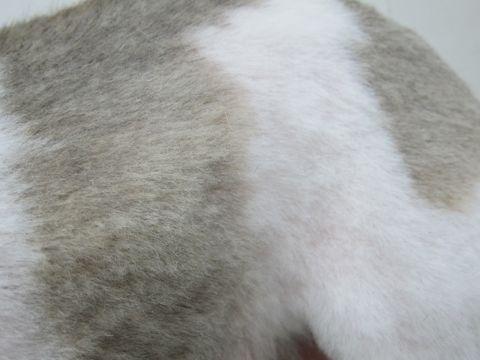 シェットランドシープドッグトリミング文京区フントヒュッテ東京ナノオゾンペットシャワーhundehutteご新規様割引トリミングシェルティサマーカット犬暑さ対策20.jpg