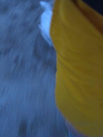ビションフリーゼフントヒュッテ東京子犬こいぬかわいいビションフリーゼブリーダーかわいいビションフリーゼのいるお店文京区本駒込hundehutte仔犬ビション223.jpg