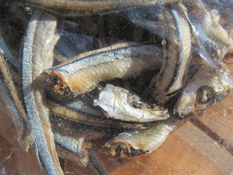 愛犬の健康おやつ近海きびなご姿干しカルシウムを体内に吸収するためのビタミンDが豊富北海道産無添加無着色保存料不使用国産犬おやつ東京フントヒュッテ文京区hundehutte2.jpg