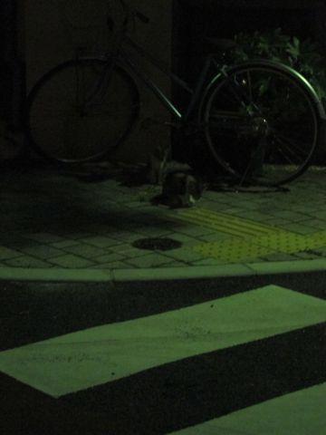 ビションフリーゼフントヒュッテ東京子犬こいぬかわいいビションフリーゼブリーダーかわいいビションフリーゼのいるお店文京区本駒込hundehutte仔犬ビション376.jpg