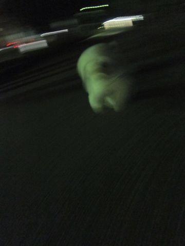 ビションフリーゼフントヒュッテ東京子犬こいぬかわいいビションフリーゼブリーダーかわいいビションフリーゼのいるお店文京区本駒込hundehutte仔犬ビション486.jpg