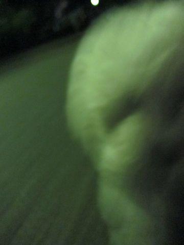 ビションフリーゼフントヒュッテ東京子犬こいぬかわいいビションフリーゼブリーダーかわいいビションフリーゼのいるお店文京区本駒込hundehutte仔犬ビション491.jpg