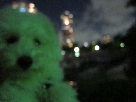 ビションフリーゼフントヒュッテ東京子犬こいぬかわいいビションフリーゼブリーダーかわいいビションフリーゼのいるお店文京区本駒込hundehutte仔犬ビション500.jpg