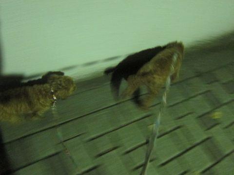 プードル犬おあずかりペットホテル文京区トリミングサロンフントヒュッテナノオゾンペットシャワー使用ショップトリミングサロン東京hundehutte駒込わんこホテル7.jpg