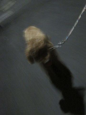 プードル犬おあずかりペットホテル文京区トリミングサロンフントヒュッテナノオゾンペットシャワー使用ショップトリミングサロン東京hundehutte駒込わんこホテル16.jpg