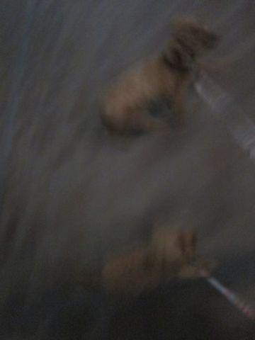 プードル犬おあずかりペットホテル文京区トリミングサロンフントヒュッテナノオゾンペットシャワー使用ショップトリミングサロン東京hundehutte駒込わんこホテル17.jpg