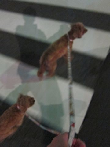 プードル犬おあずかりペットホテル文京区トリミングサロンフントヒュッテナノオゾンペットシャワー使用ショップトリミングサロン東京hundehutte駒込わんこホテル22.jpg