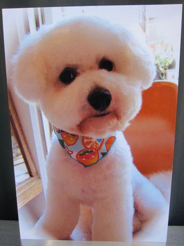 お誕生日バースデーカード犬トリミングバースデー割引トリミングフントヒュッテ文京区ナノオゾンペットシャワー使用トリミングサロン駒込hundehutte東京1.jpg