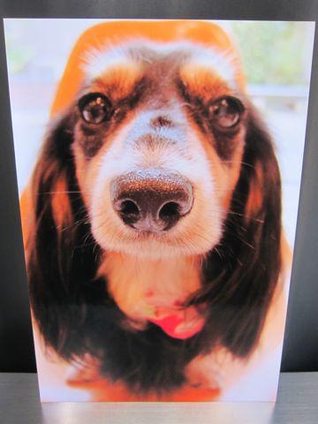 お誕生日バースデーカード犬トリミングバースデー割引トリミングフントヒュッテ文京区ナノオゾンペットシャワー使用トリミングサロン駒込hundehutte東京3.jpg